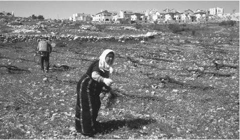 Palestinians farming the rocky soil near Efrata, in the West Bank